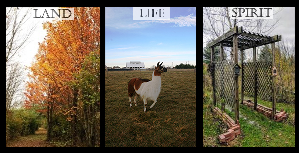 Land, Life, and Spirit. Image of meditation trail, our llama in front of our barn, and the entrance to our outdoor labyrinth.
