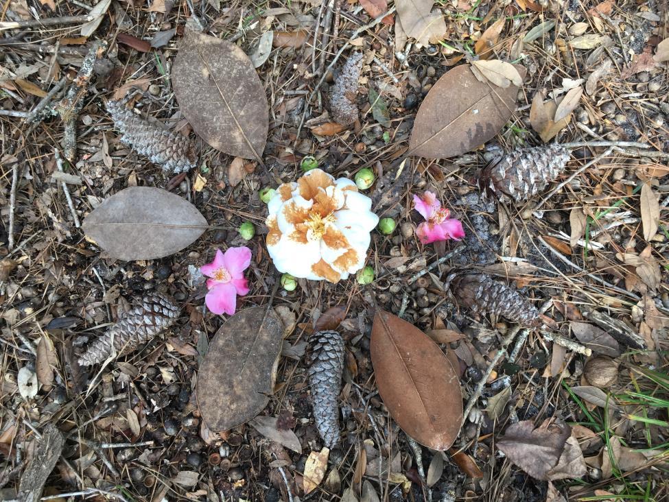 Cancelled: God's Designs: Nature Art @ Shepherd's Corner Ecology Center