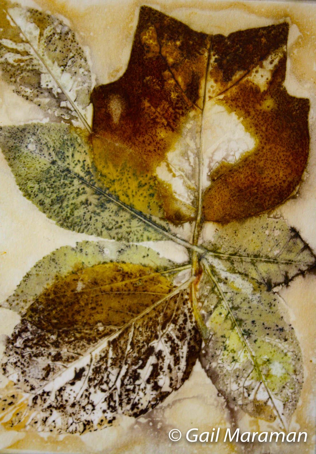 Poplar leaves printed on paper.