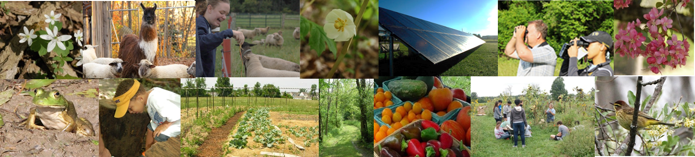 Composite image of: white Shepherd's Corner Barn, llama, people engaged in learning outdoors, solar panels, a frog, and white flowers.