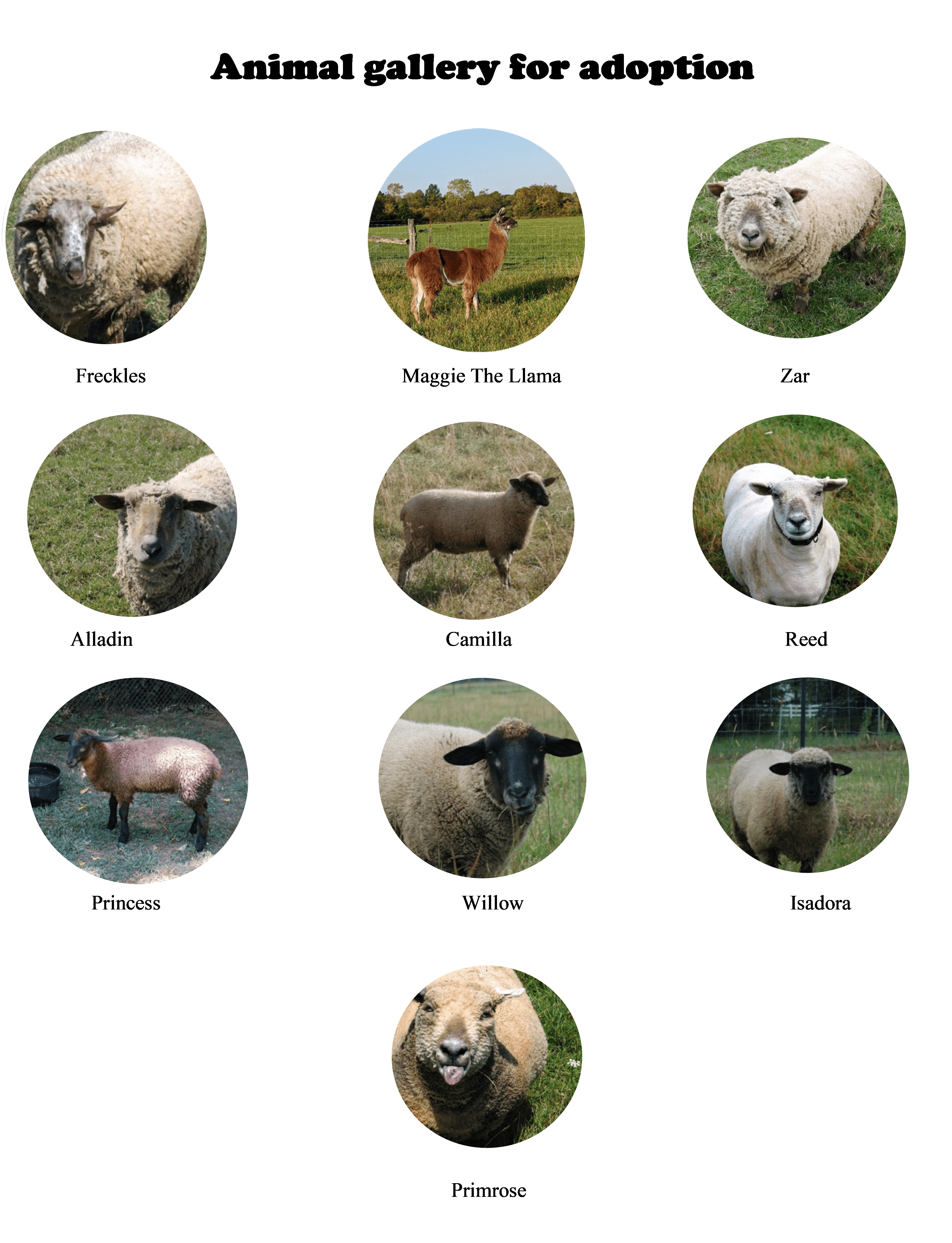 The faces of our sheep & llama in small circles.