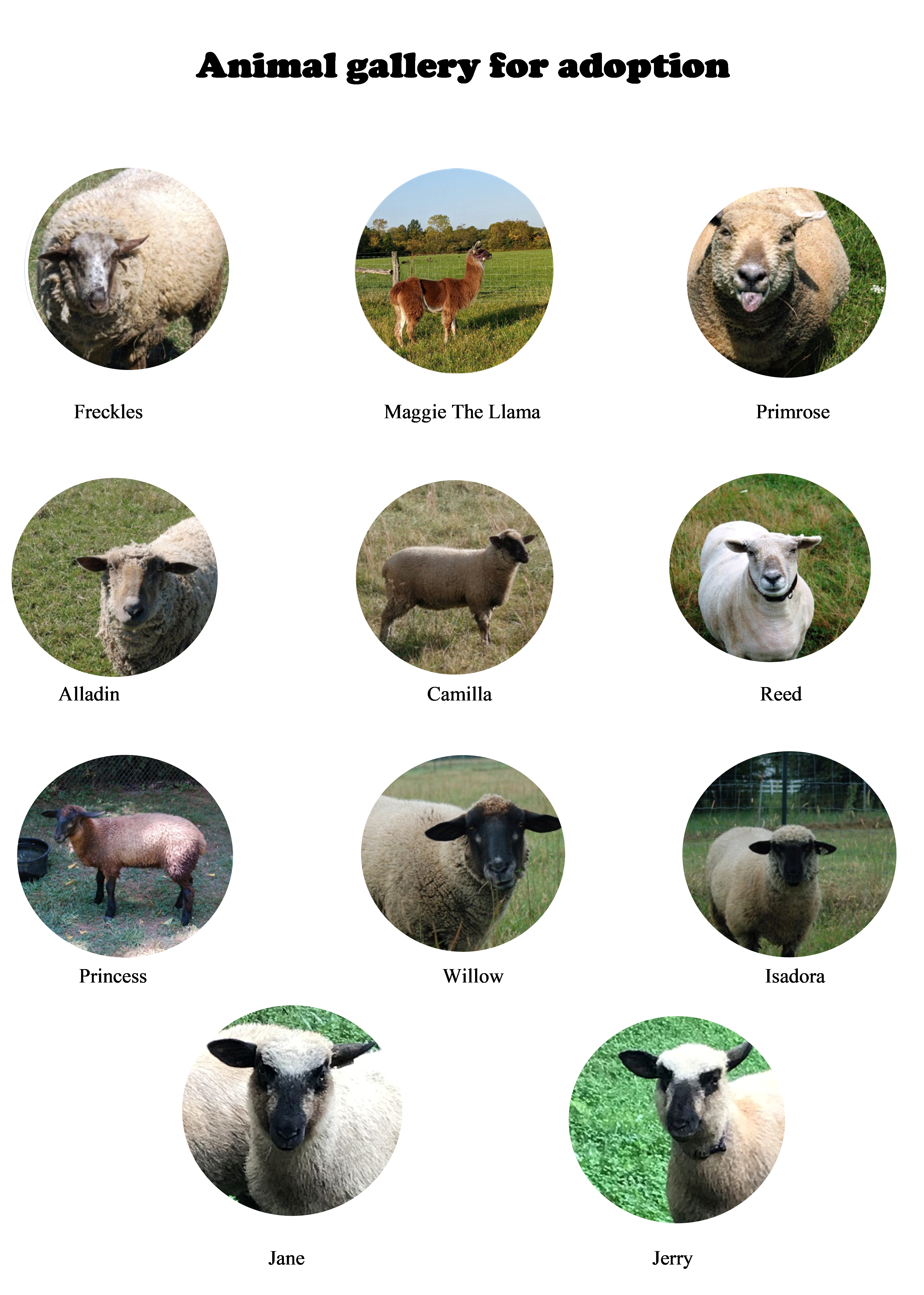 small circular images of our sheep and llama that can be adopted, aka sponsored.