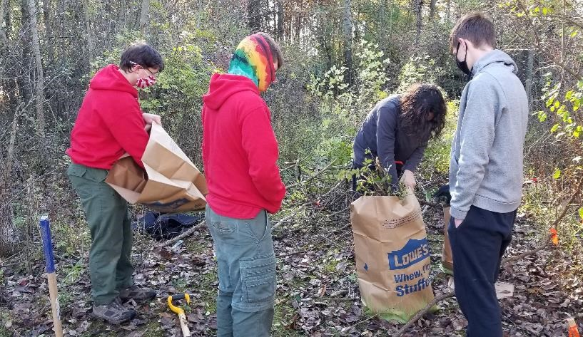 Three bout scout troop members working to fill brown yard waste paper bags. One is opening a new bag while another individual stuffs invasive plants into a nearly full bag.