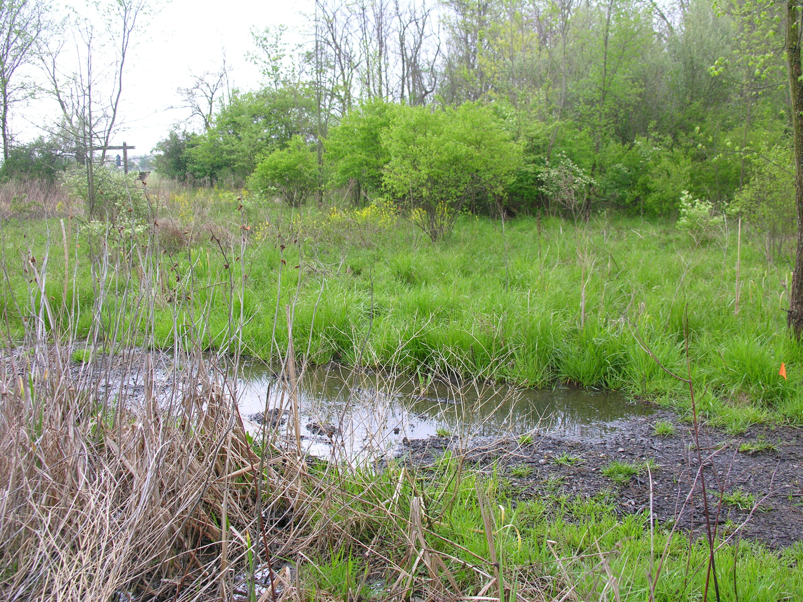 Grassy green area with a low muddy spot. This low muddy spot is a vernal pool.