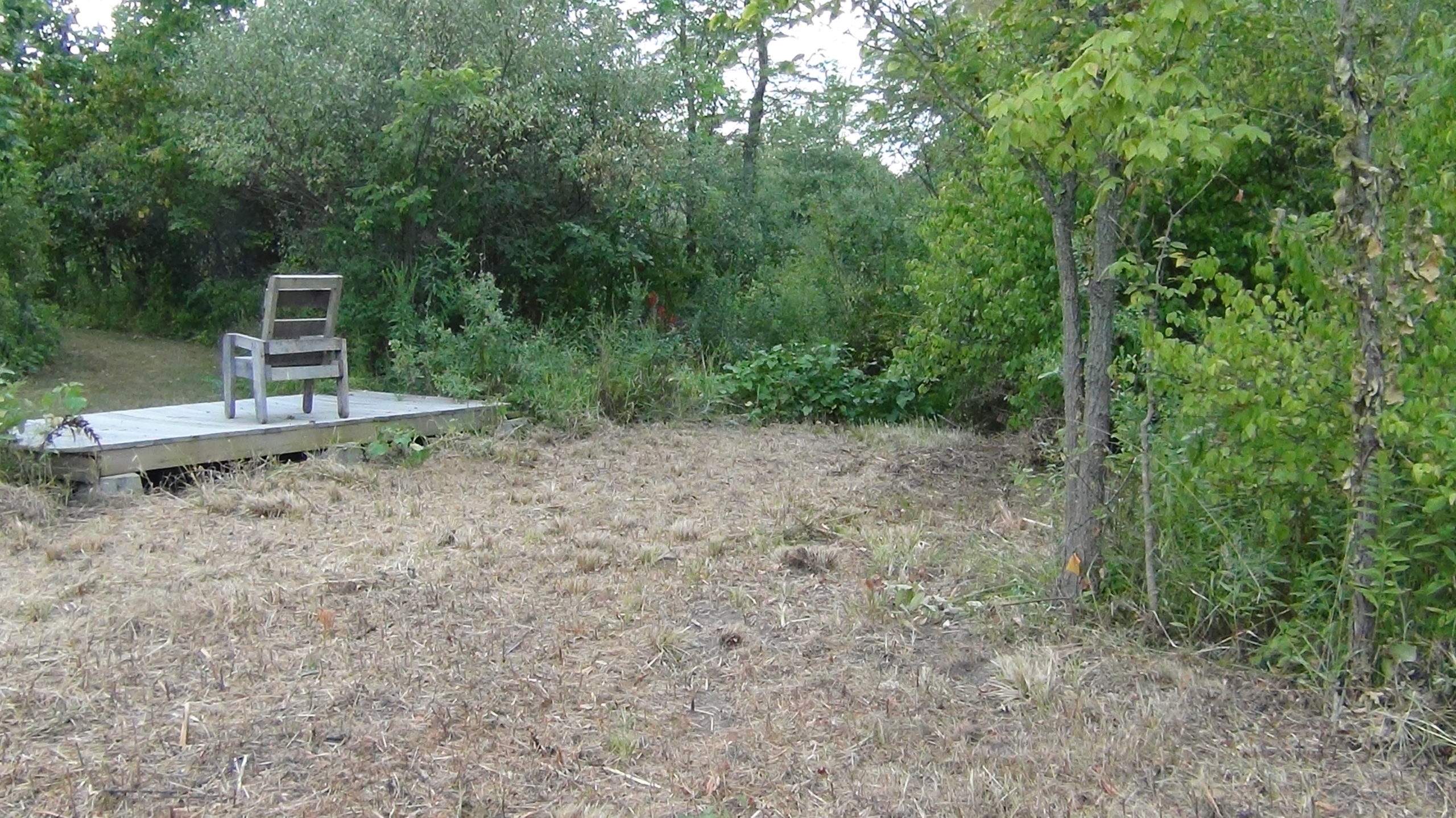 A bench sits on a platform, facing away from the vernal pool area.